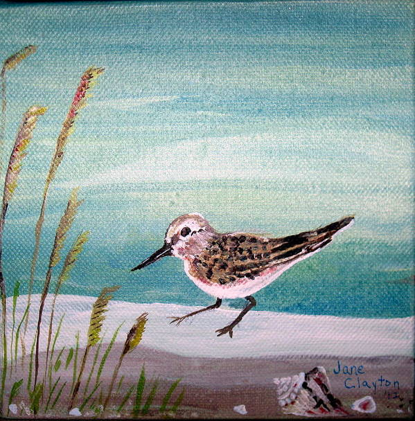 This Is The Second In A Series Of Sandpipers And Seashells. Art Print featuring the painting Sandpiper And Conch by Jane Williams Clayton