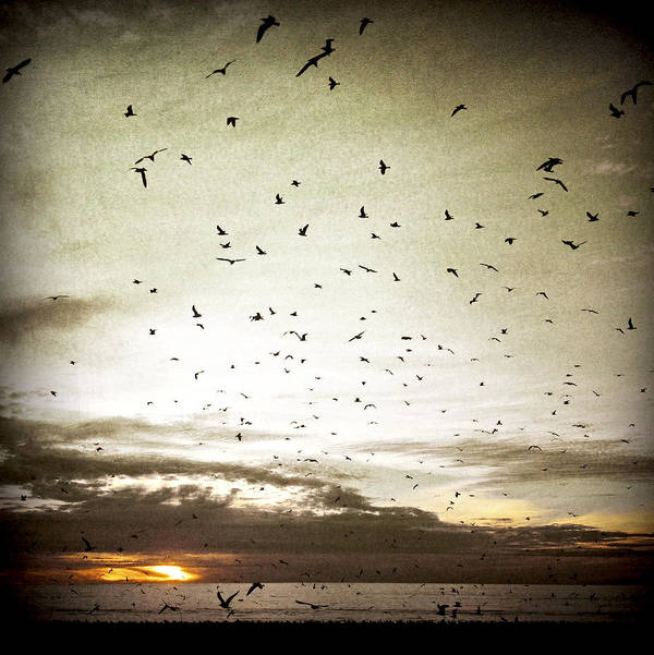 Sunset Art Print featuring the photograph Sunset Flight by David Chatterton