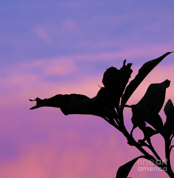 Sunset Art Print featuring the photograph Sunset Silhouette by Rose Hill