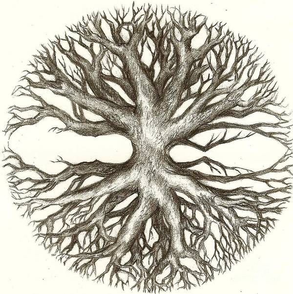 Branches Art Print featuring the drawing Symetree by Julianna Ziegler