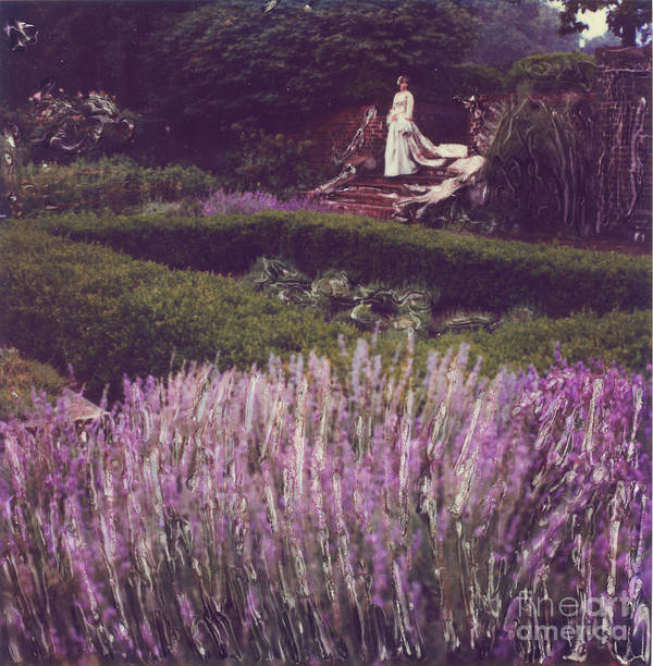 Polaroid Art Print featuring the photograph Twilight Among The Lavender by Steven Godfrey