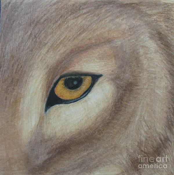 Wolf Art Print featuring the drawing Watcher by Juli House