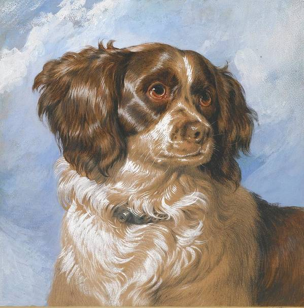 Sir Edwin Henry Landseer Art Print featuring the painting Dash by MotionAge Designs