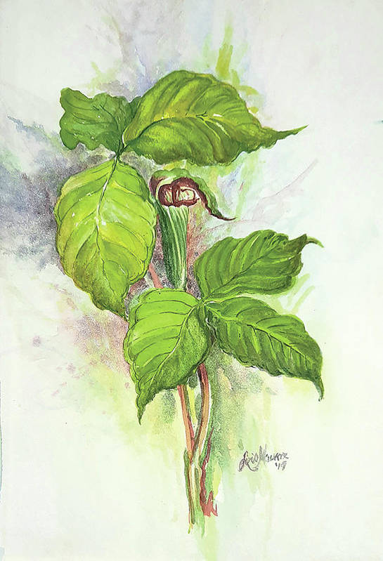Flower Art Print featuring the painting Jack in the Pulpit by Lois Mountz