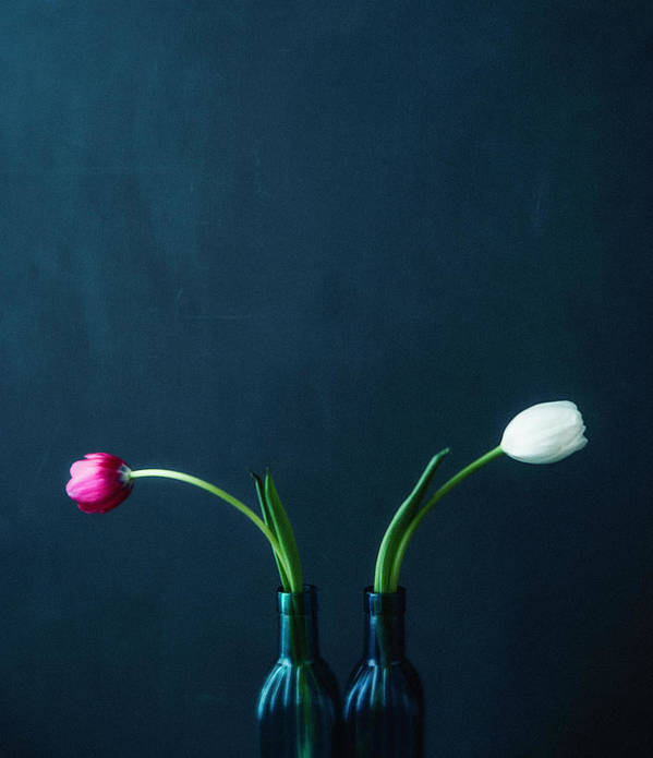Mother's Day Art Print featuring the photograph Tulip Still Life For Mothers Day by Catlane