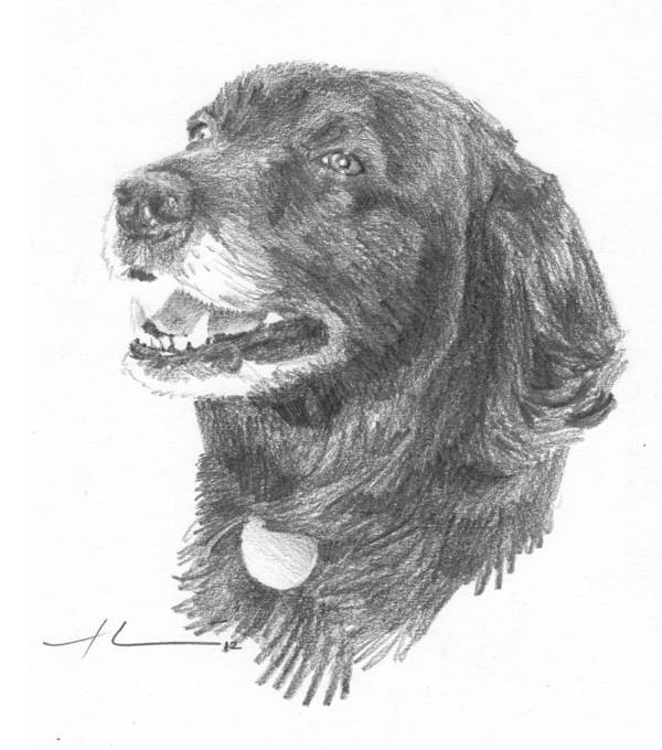 <a Href=http://miketheuer.com Target =_blank>www.miketheuer.com</a> Old Black Lab Pencil Portrait Art Print featuring the drawing Old Black Lab Pencil Portrait by Mike Theuer