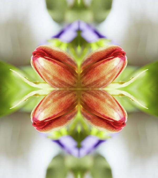 Tranquility Art Print featuring the photograph Red Tulips by Silvia Otte