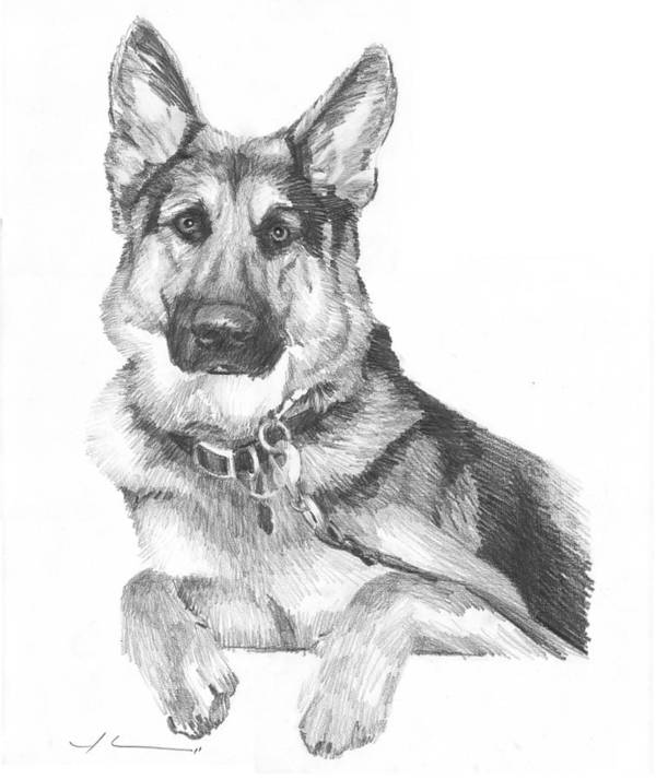 <a Href=http://miketheuer.com Target =_blank>www.miketheuer.com</a> Shepherd Dog Pencil Portrait Art Print featuring the drawing Shepherd Dog Pencil Portrait by Mike Theuer