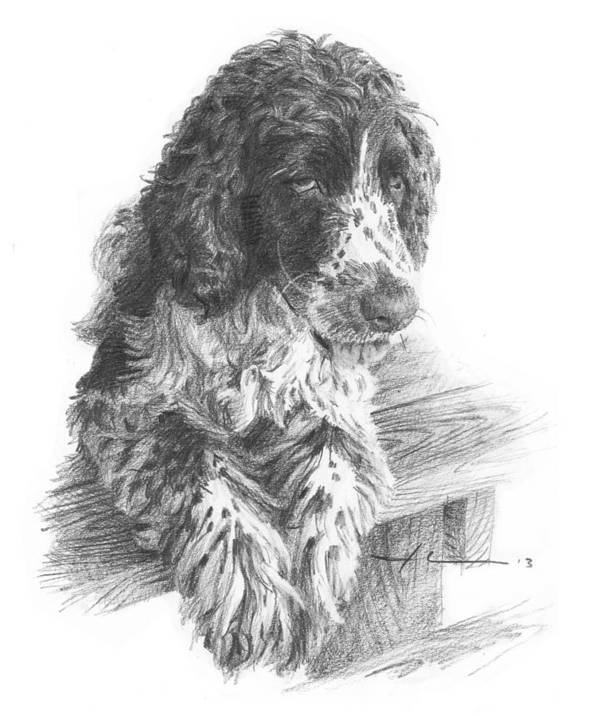<a Href=http://miketheuer.com Target =_blank>www.miketheuer.com</a> Springer Spaniel Dog Pencil Portrait Art Print featuring the drawing Springer Spaniel Dog Pencil Portrait by Mike Theuer