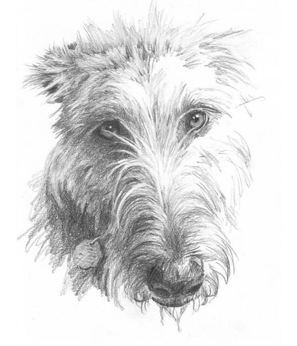 <a Href=http://miketheuer.com>www.miketheuer.com</a> Wolf Hound Pencil Portrait Art Print featuring the painting Wolf Hound Pencil Portrait by Mike Theuer