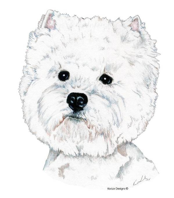 West Highland White Terrier Art Print featuring the drawing West Highland White Terrier, Westie by Kathleen Sepulveda