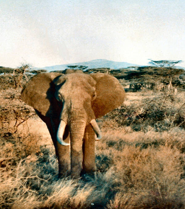 Elephant Art Print featuring the photograph Elephant Eyes by Lin Grosvenor
