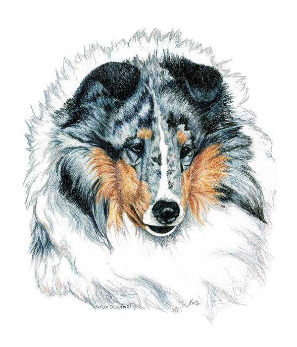 Sheltie Art Print featuring the drawing Shetland Sheepdog, Sheltie, Blue Merle by Kathleen Sepulveda