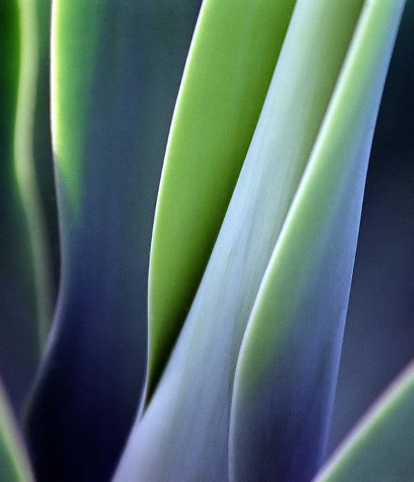 Sparse Art Print featuring the photograph Green Smooth Leaves by Sergeo syd