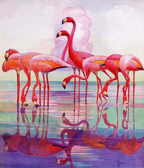 Birds Art Print featuring the drawing Pink Flamingos by Francis Lee Jaques