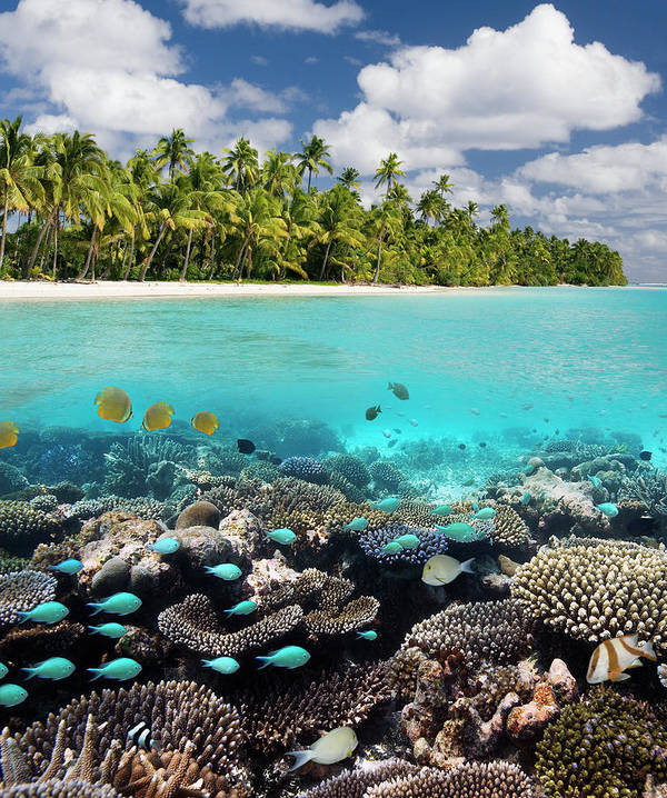 Underwater Art Print featuring the photograph Tropical Paradise - The Maldives by Steve Allen