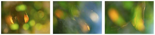 Triptico Hojas Art Print featuring the photograph Triptico Hojas Luminosas by Guido Montanes Castillo