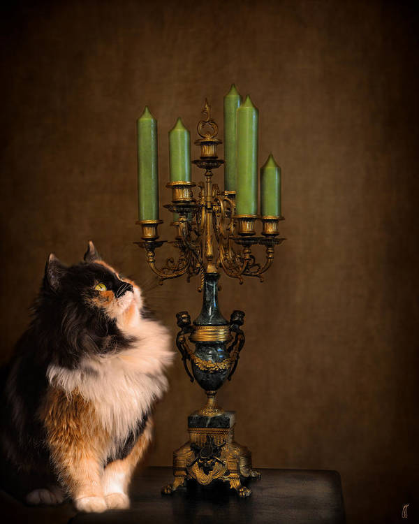 Animal Art Print featuring the photograph The Cat And The Candelabra by Jai Johnson