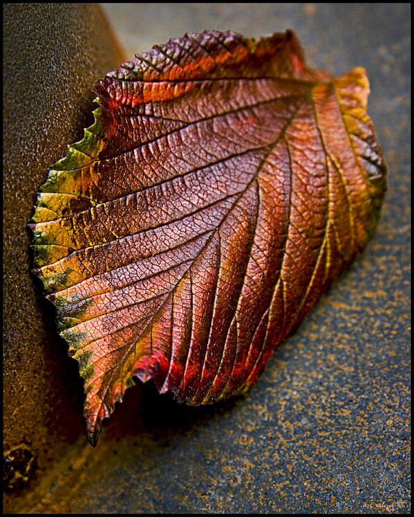 Flora Art Print featuring the photograph Colorfall by Daniel G Walczyk