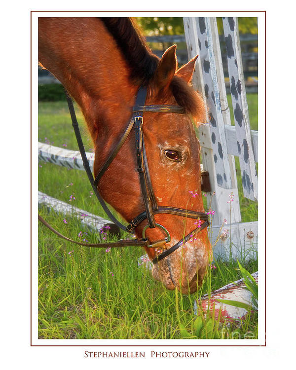 Horse Art Print featuring the photograph Grass And Flowers by Stephanie Hayes
