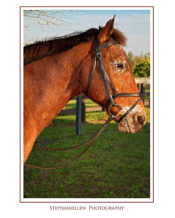 Horse Art Print featuring the photograph In Profile by Stephanie Hayes