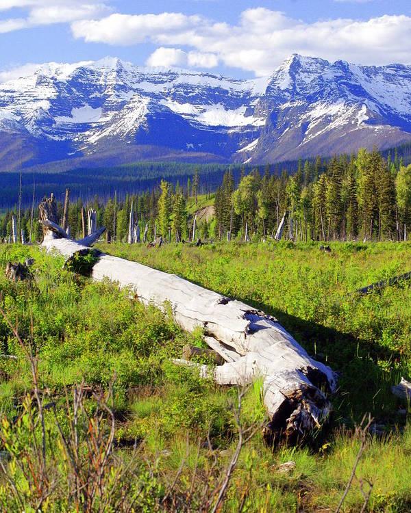 Mountain Art Print featuring the photograph Mountain Splendor by Marty Koch