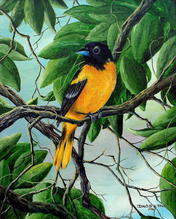 Oriole Art Print featuring the painting Northern Oriole by David G Paul