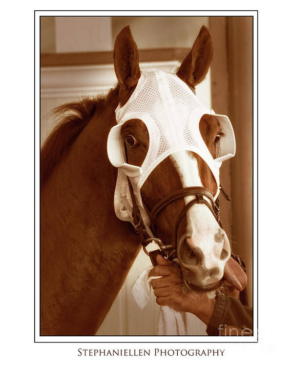 Horse Art Print featuring the photograph Ready To Race by Stephanie Hayes
