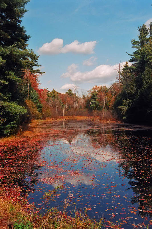 Autumn Art Print featuring the photograph Autumn Reflections by Joann Vitali