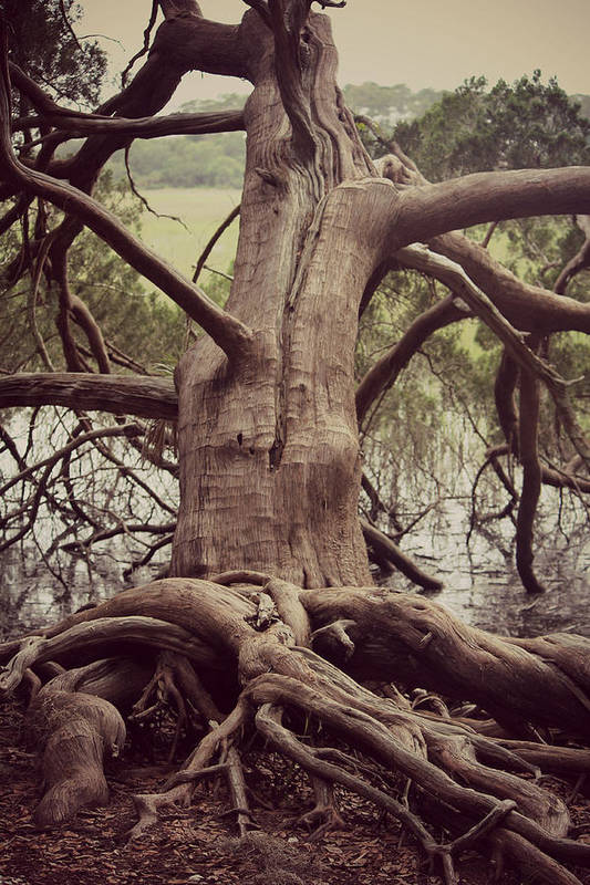 Tree Art Print featuring the photograph Roots by Tiffany Lane Photography