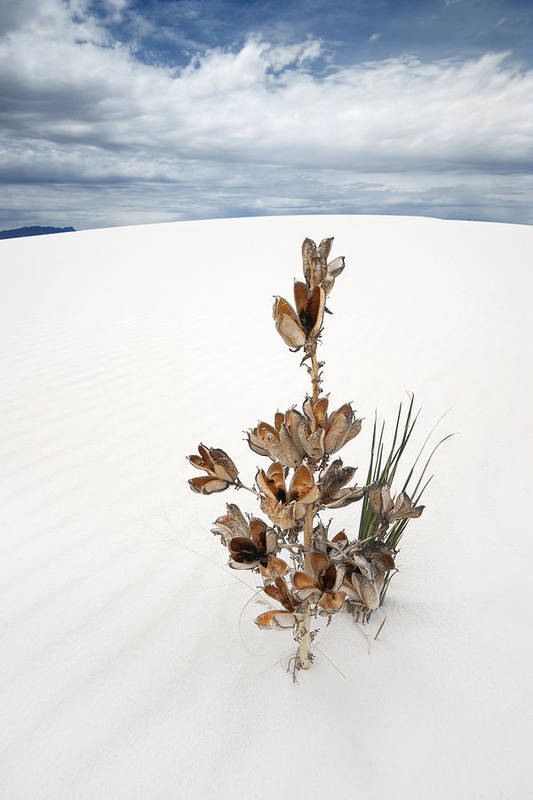 White Sands Art Print featuring the photograph Solitude by Ryan Heffron