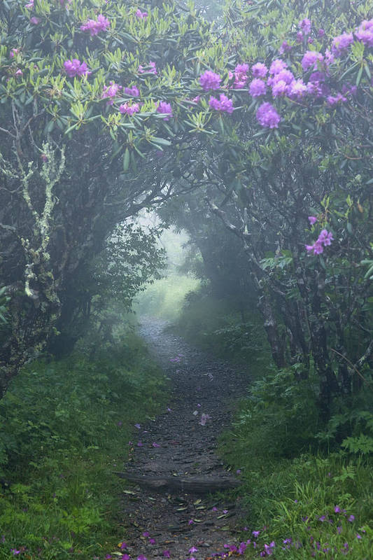 Fairy Path Print featuring the photograph Fairy Path by Rob Travis