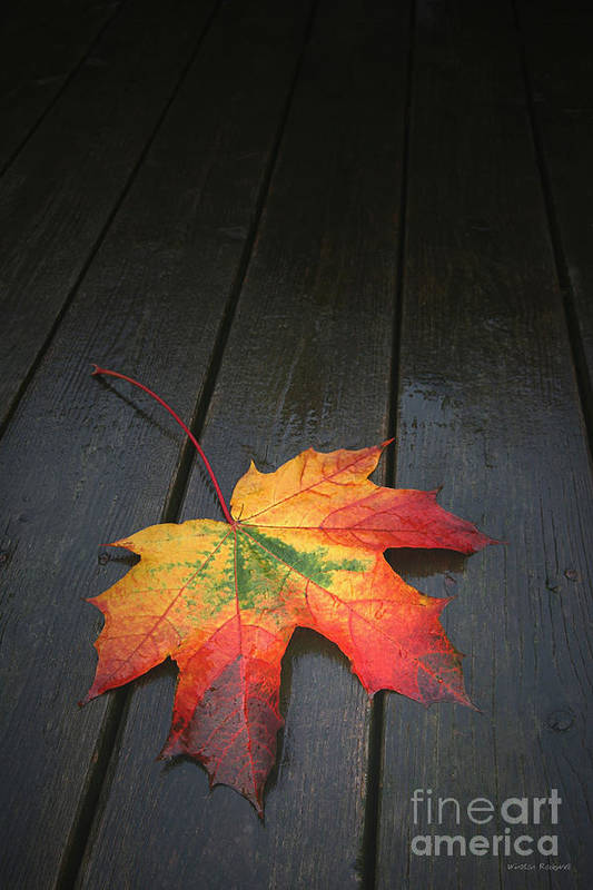 Leaf Autumn Fall Rain Color Art Print featuring the photograph Fall by Winston Rockwell