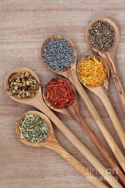 Herbs for Health by Marilyn   Barbone
