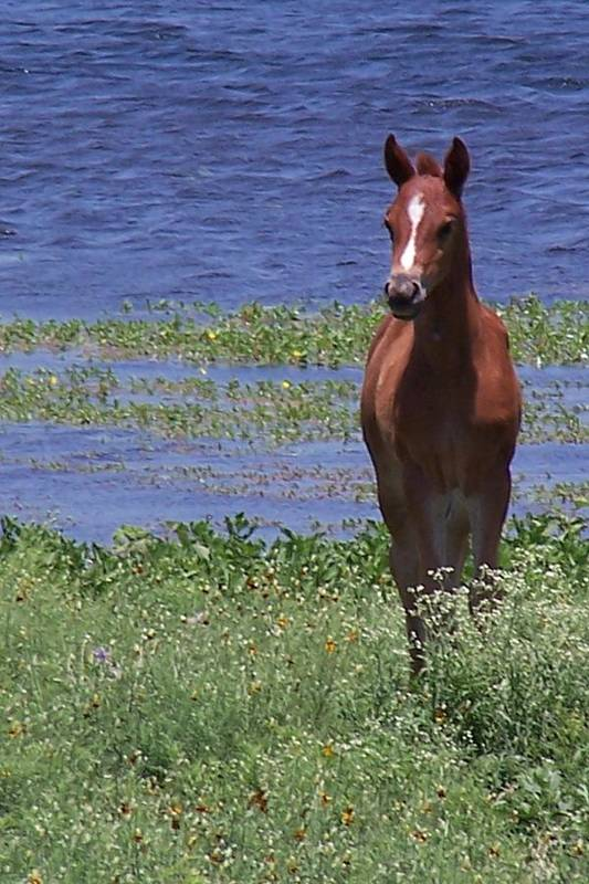 Horse Art Print featuring the photograph Look At Me by Lilly King