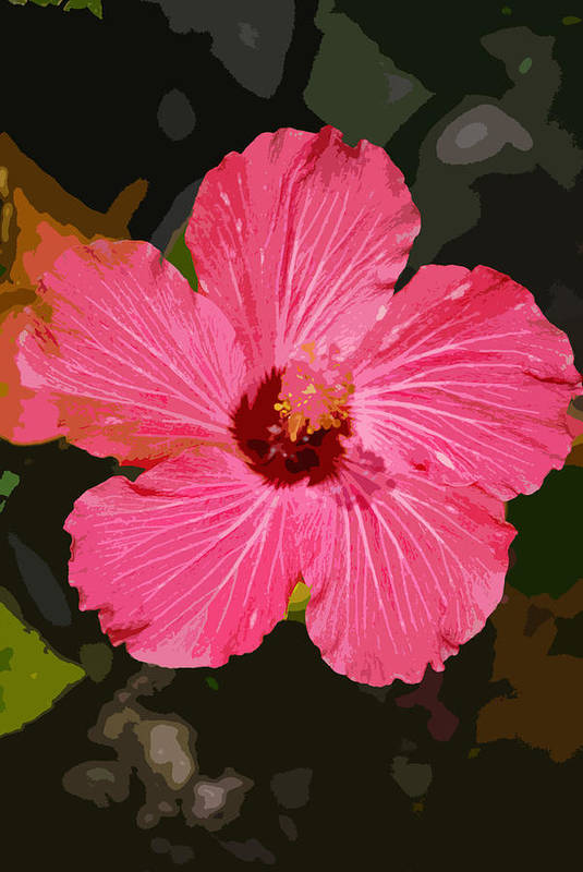 Flower Art Print featuring the photograph Pink Hibiscus by Kimberly Camacho