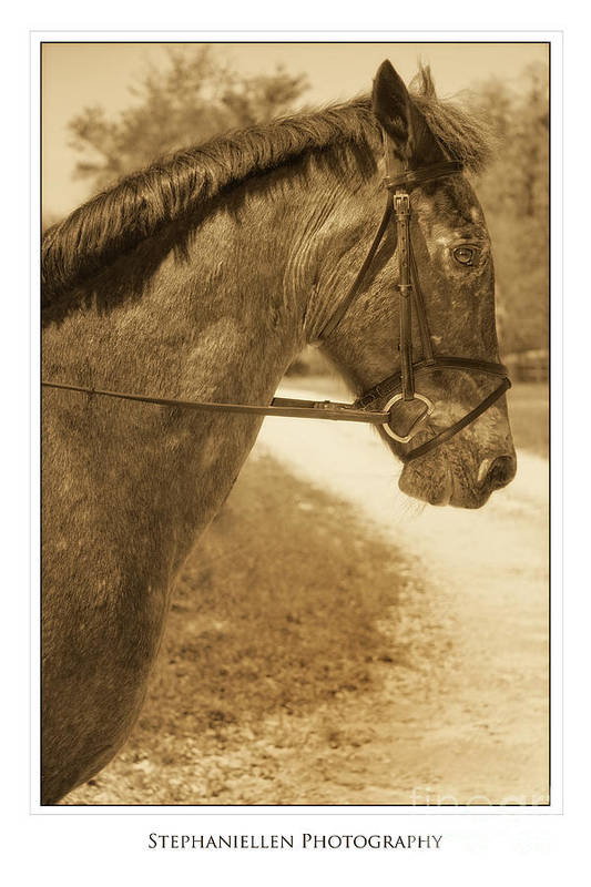 Horse Art Print featuring the photograph Profile by Stephanie Hayes