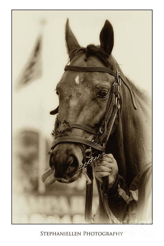 Horse Art Print featuring the photograph Sephia Racehorse by Stephanie Hayes