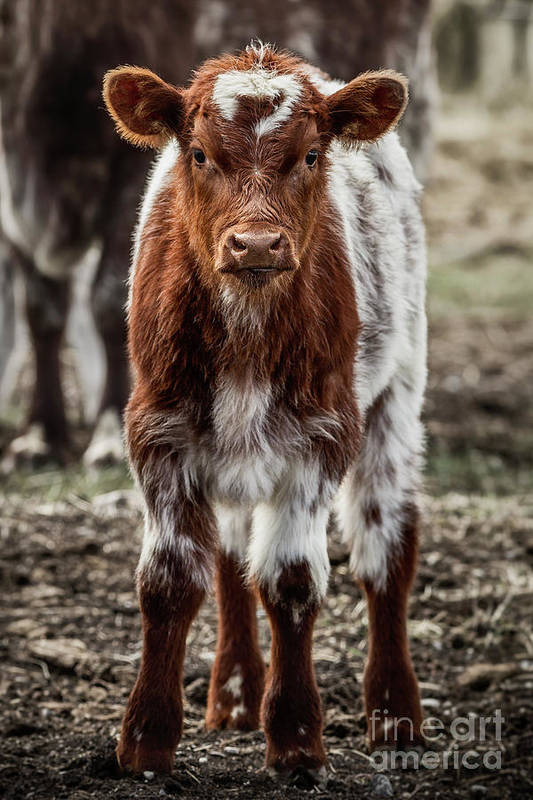 Cinematic Art Print featuring the photograph Spring Baby by Brad Allen Fine Art