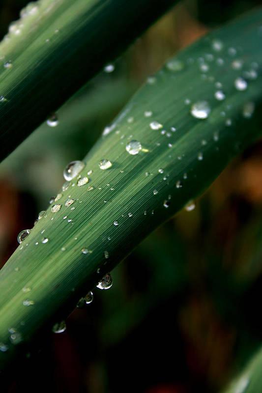 Photograph Art Print featuring the photograph Summer Rain by Alexandra Harrell