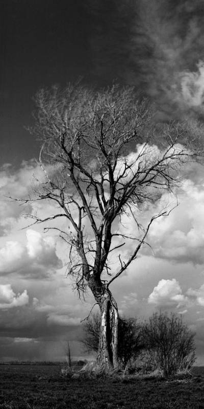 Landscape Art Print featuring the photograph Lone Tree by Rich Stedman