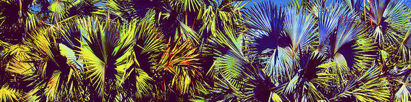 Palm Trees Art Print featuring the photograph Colored Palms by Michael Guirguis