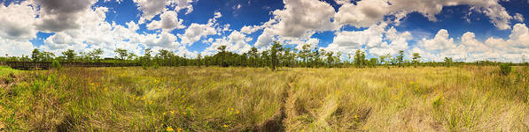 Everglades Art Print featuring the photograph Florida Everglades by Raul Rodriguez