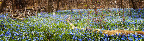 Flowers Art Print featuring the photograph Carpet Of Blue Flowers In Spring Forest by Elena Elisseeva