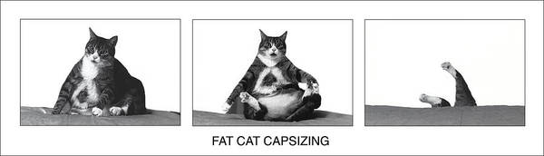 Cats Art Print featuring the photograph Fat Cat Capsizing by Richard Watherwax