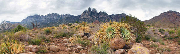 New Mexico Art Print featuring the photograph Organ Mountains Sotol Plants by Nathan Mccreery