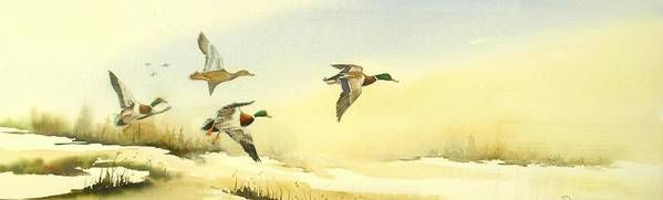 Mallard Ducks Art Print featuring the painting Flying Over by Lynne Parker