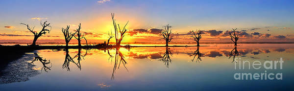 Silhouettes Dead Gum Tree Line Still Calm Water Reflections Sunrise Dawn Early Morning Pelican Point Lake Barmera Bonney Riverland South Australia Australian Art Print featuring the photograph Silhouetted Sential Sunset by Bill Robinson