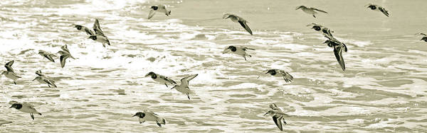 Birds Art Print featuring the photograph Seagulls Landing Tampa Florida by Kristen Vota