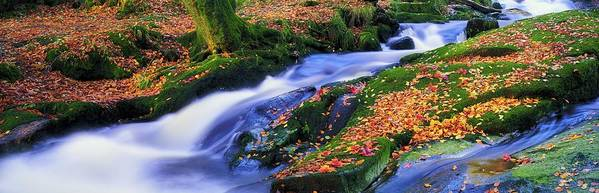 Autumn Art Print featuring the photograph Glenmacnass Waterfall, Co Wicklow by The Irish Image Collection